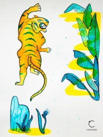 tigre canaria
